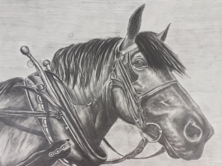 Draft horse drawing